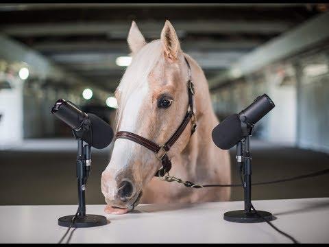 NEIGH-SMR (aka Horse