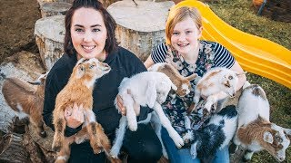 which-baby-goats-will-we-keep