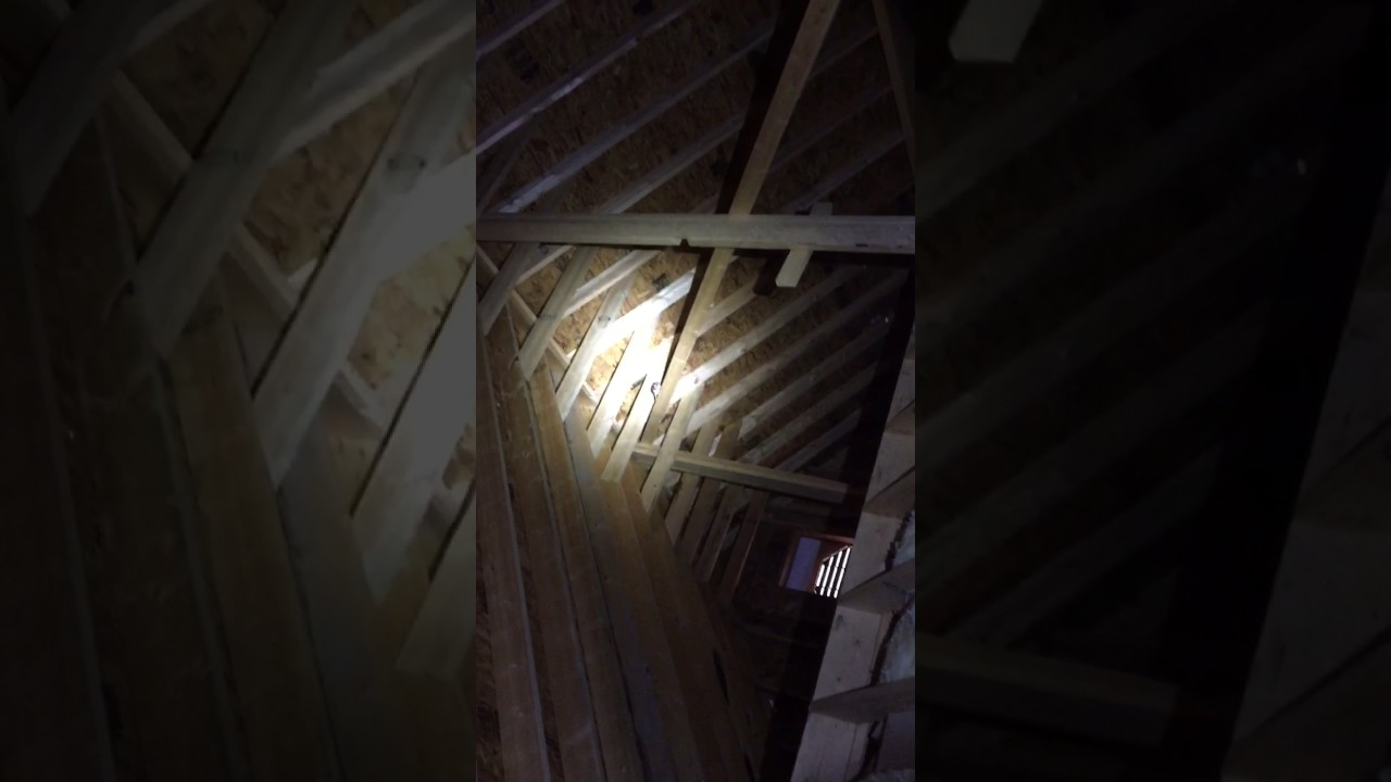 Flying Squirrels In Attic Running Noises At Night In
