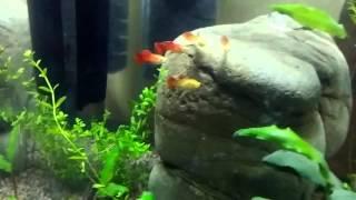 Кот и аквариум.