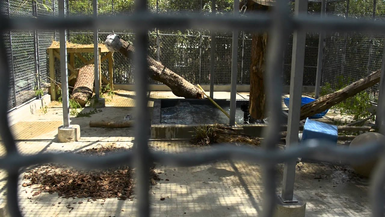 Download Birmingham Zoo Black Bear Cubs - Behind The Scenes - Arriving at the Zoo