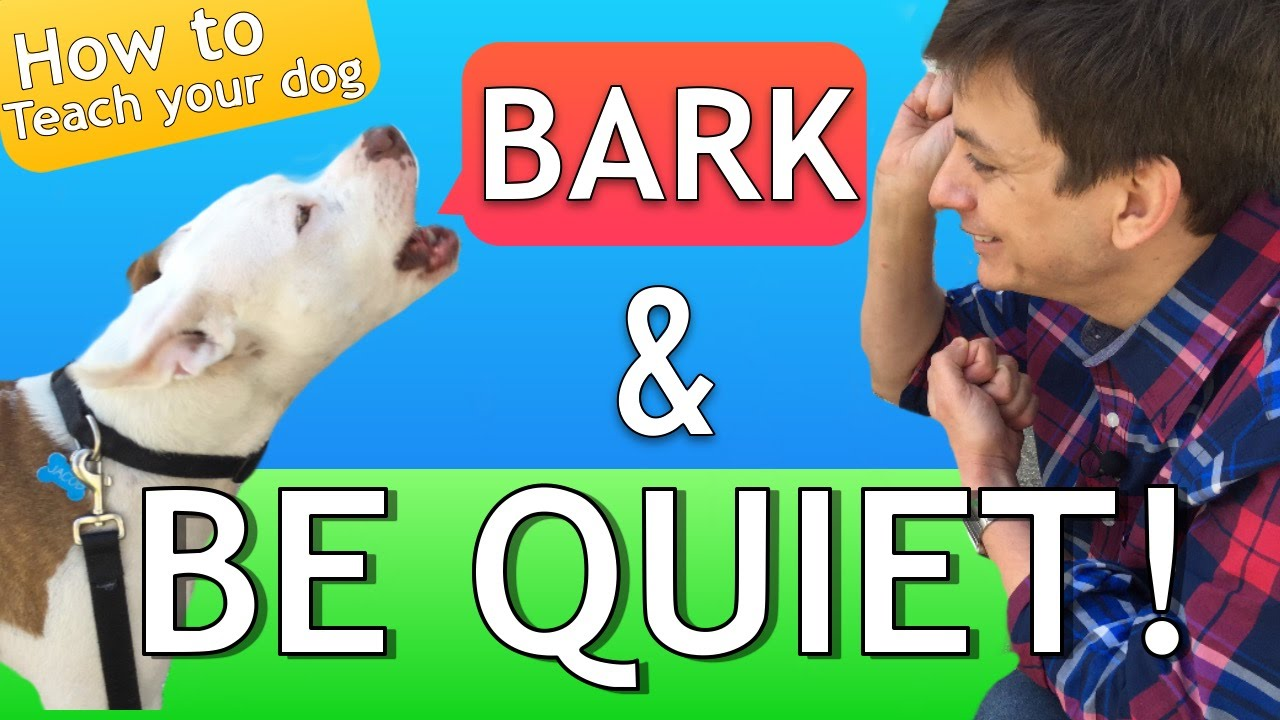 How to Teach your Dog to Bark and STOP BARKING! - YouTube | How To Train Dog Not To Bark