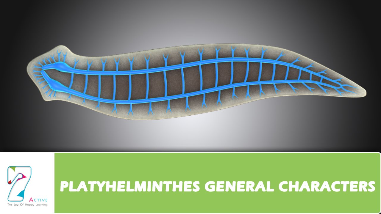 Platyhelminthes General Characters Youtube
