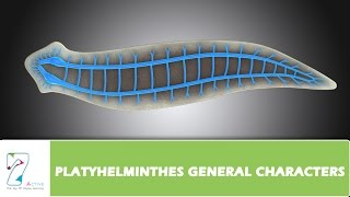 PLATYHELMINTHES GENERAL CHARACTERS