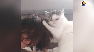Cat Styles His Mom's Hair
