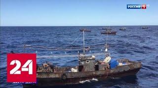 За нападение на российских пограничников браконьерам из КНДР грозит тюрьма - Россия 24