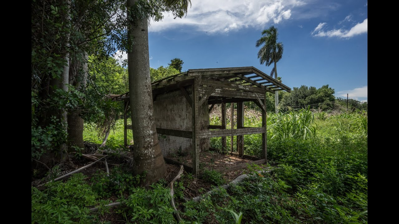 Urban Exploring Old Gatorland Park In Florida By Jason. Commercial Burglar Alarm Plan Data Management. New Construction Software Stop Drinking Soda. Html Code Scrolling Text Kansas Online School. Automotive Mechanic Job Edina Plastic Surgery. 24 Hour Dish Television Lubbock. Lpn To Rn Bridge Programs In Pa. How To Obtain Articles Of Incorporation. Printer Service Contracts Buying Gold Jewelry