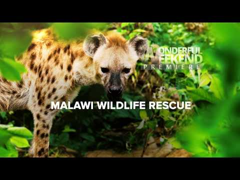 Malawi Wildlife Rescue TV series trailer