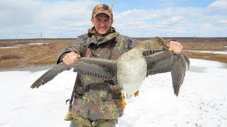 Весенняя охота на гусей. Сезон 2017 года