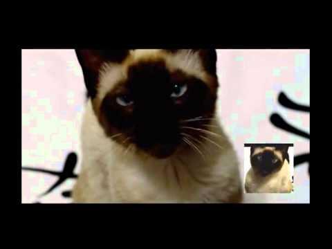 Game of Thrones theme, remix by unknown cat. Игра тронов (муз. тема) ремикс