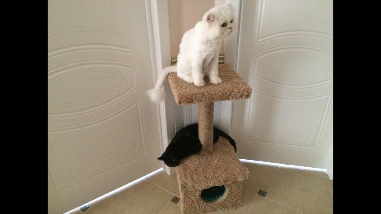Как своими руками построить кошке дом из фото 889