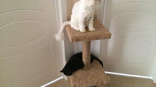 Кошачий домик своими руками(Мои кошаки стали присматриваться к дивану на предмет поточить об него когти. В связи с этим я в спешном поря..., 2016-08-08T11:57:56.000Z)