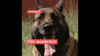 Полицейский воспитал собаку-полиглота