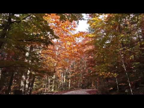 Beautiful Autumn Forest / 1 Hour Relaxing Drive with Sound of Wind