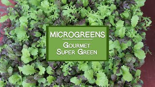 How to Grow Microgreens for a Gourmet Super Green