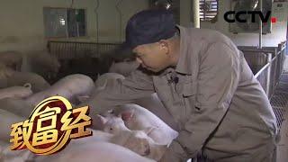 《致富经》 20200421 陈忠洪和他的38万头猪  CCTV农业