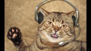 ✅ Звуки которых услышит только ваш кот или ваша кошка!