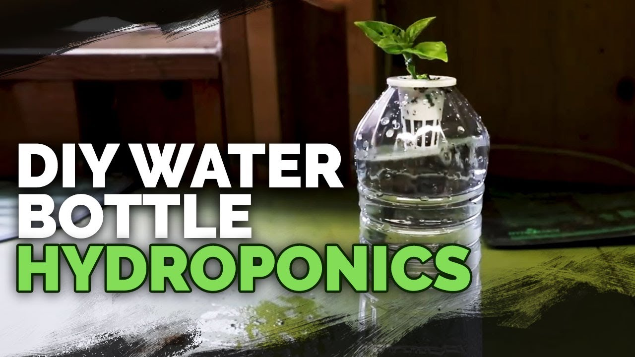 Diy Water Bottle Hydroponic System For Propagating And Herbs