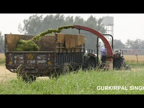Most advanced dairy farm of Punjab with latest technology