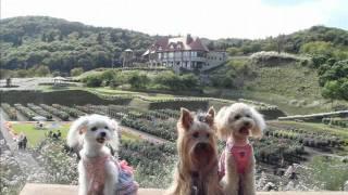 7月6日に愛犬ラッキーが突然亡くなってしまいました たくさんの思い出を...