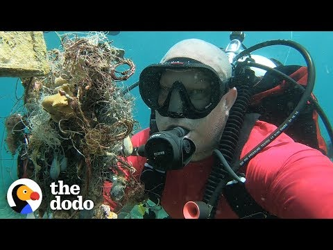 Diver Finds Shark Trapped In Fishing Lines — Then Does THIS | The Dodo