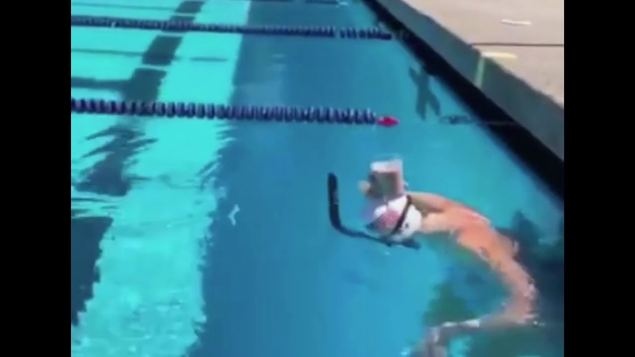 Katie Ledecky swims with a glass of chocolate milk on her head