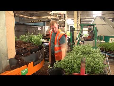 Palmstead Nurseries growing trees, shrubs and perennials (wholesale plant nursery)