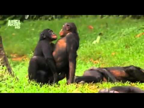 Как обезьяны делают это