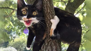 Funniest Cats And Cutest  Dogs  Try Not To Laugh or Grin  Funny Animal Vines