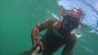Spearfishing Anglesey Pollock.