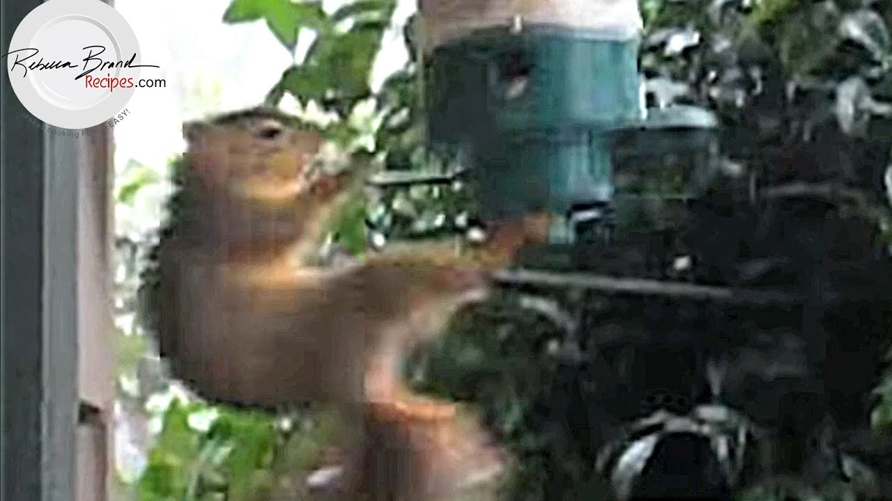 a bird keep r squirrels keeps out off comments lifehacks feeder of