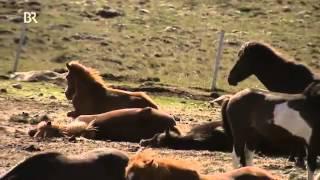 Im Bann der Pferde   Folge 1   Island   Dokumentation