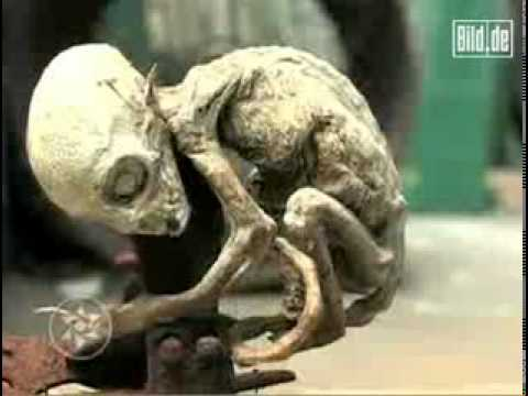 Alien- Skelett _ Mexiko 2007