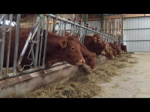 100-cow cattle shed built through French partnership