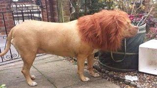 इस शेर की हकीकत जान, दंग रह जाएंगे आप