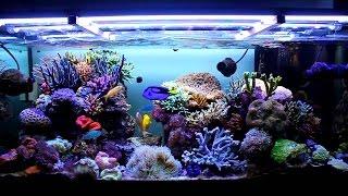 Come realizzare un acquario marino (1 parte)