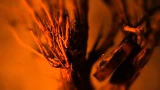 Cida Airam - Ritual Profano (Videoclipe Oficial)