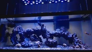 Fishtank Stream thumbnail