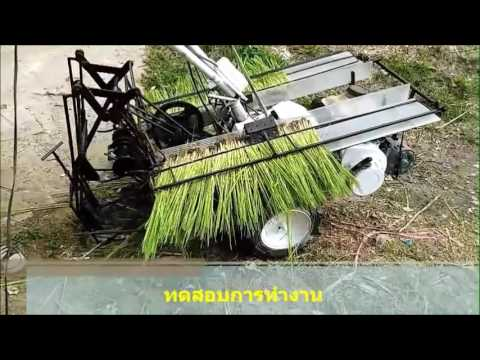 Rice transplanter in Thailand # Root wash seedling