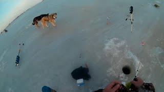 Зимняя рыбалка Кама берш крайний лед