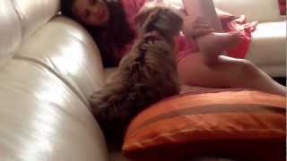 vuclip Angry dog / scaredy dog xxxx - with Lucy And Emily xxxx