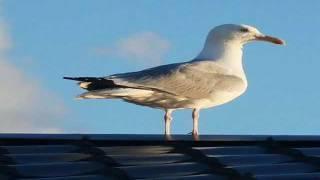 Roofing Penrith call 0434 724 523 in Penrith