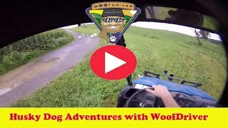 LIVE Video NOW | Free Raging in Rain | Dog Adventurer | Adventure with Husky Dogs