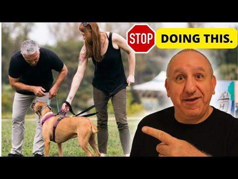 stop-my-dog's-bad-behaviour-|-how-to-control-myself