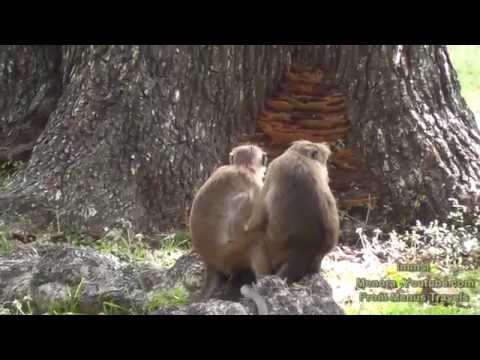 Relax With Nature - Toque Macaques - Life Of Monkeys