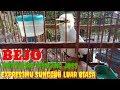 Masteran Burung Jalak Putih Gacor Full Isian  Mp3 - Mp4 Download