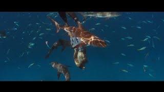 Красота Подводного Мира ... отрывок из фильма (Добро Пожаловать в Рай/Into The Blue)2005