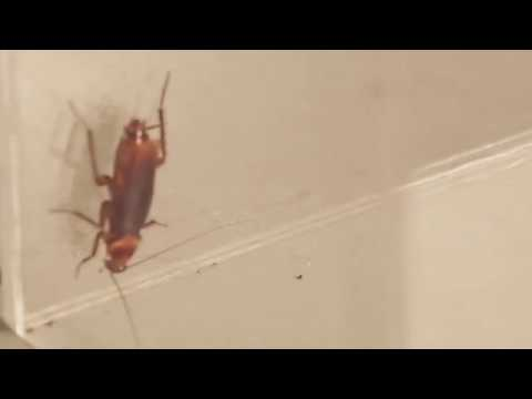 Insect name - Cockroach