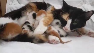 First four days of the lives of newborn kittens and mother cat Lotje