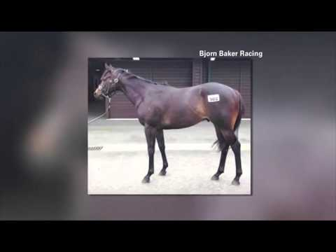 Australian Race Horse Named Horsey McHorse Face
